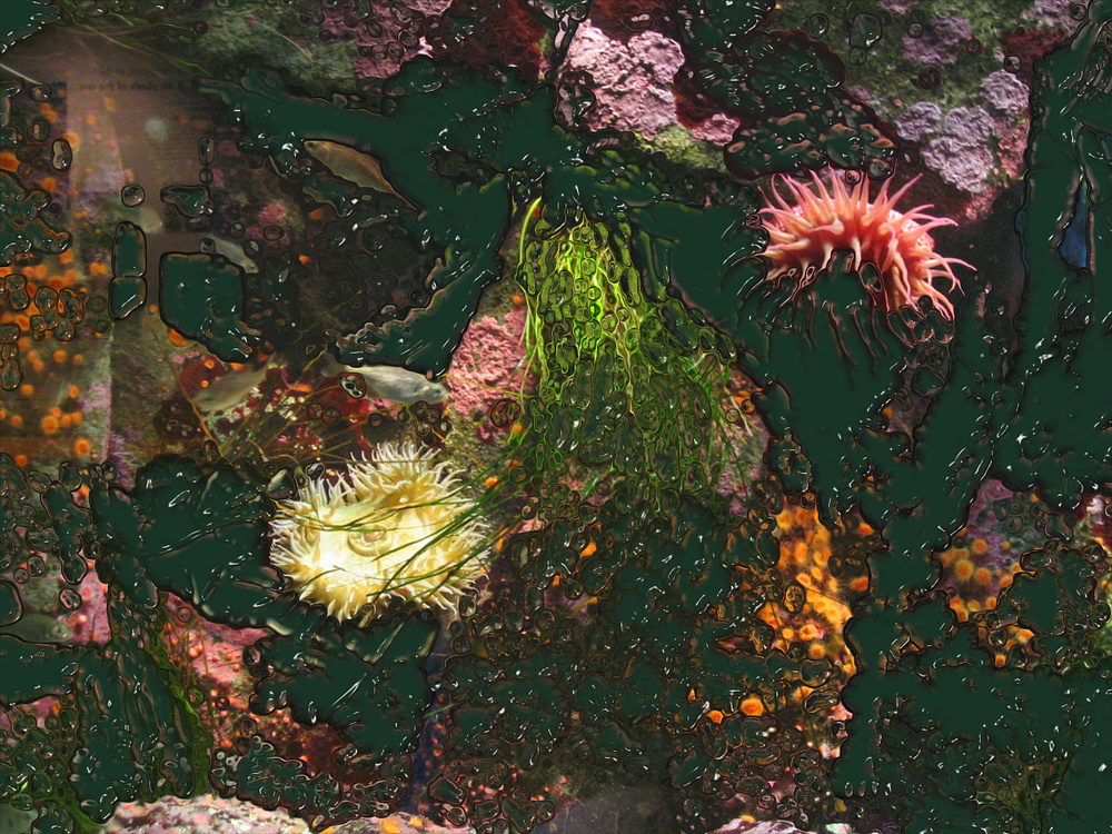 Damon Zucconi, Colors Preceding Photographs (aquarium), 2008