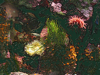 Colors Preceding Photographs (aquarium)