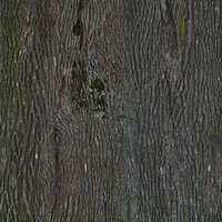 nature_trunk_0025_01_preview.jpg