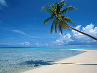 beach_and_palm_tree.161222336.jpg