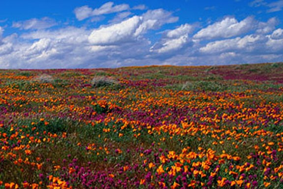 field_of_flowers_wall_mural.jpg